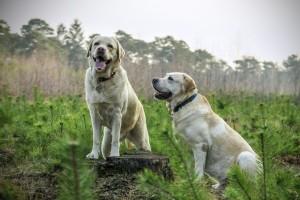 I migliori prodotti per cani