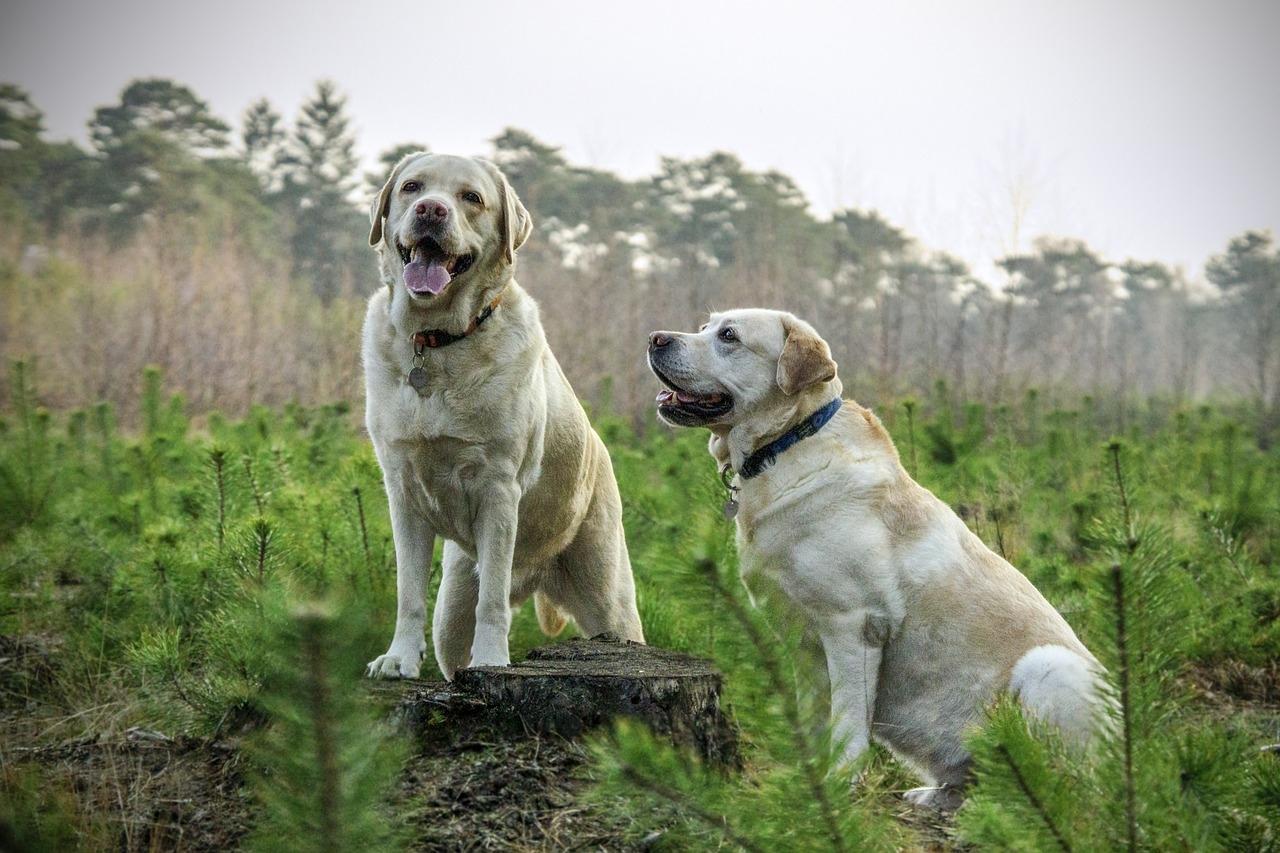 Prodotti per Cani: come sceglierli