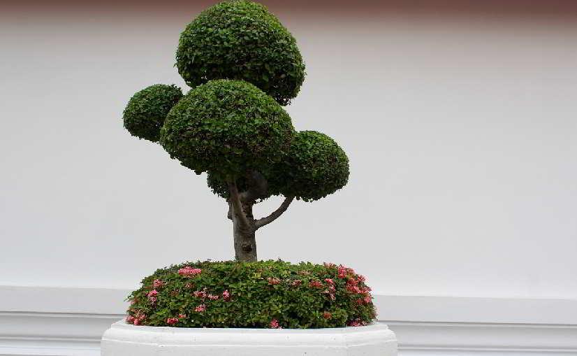 Ridurre lo stress con i bonsai