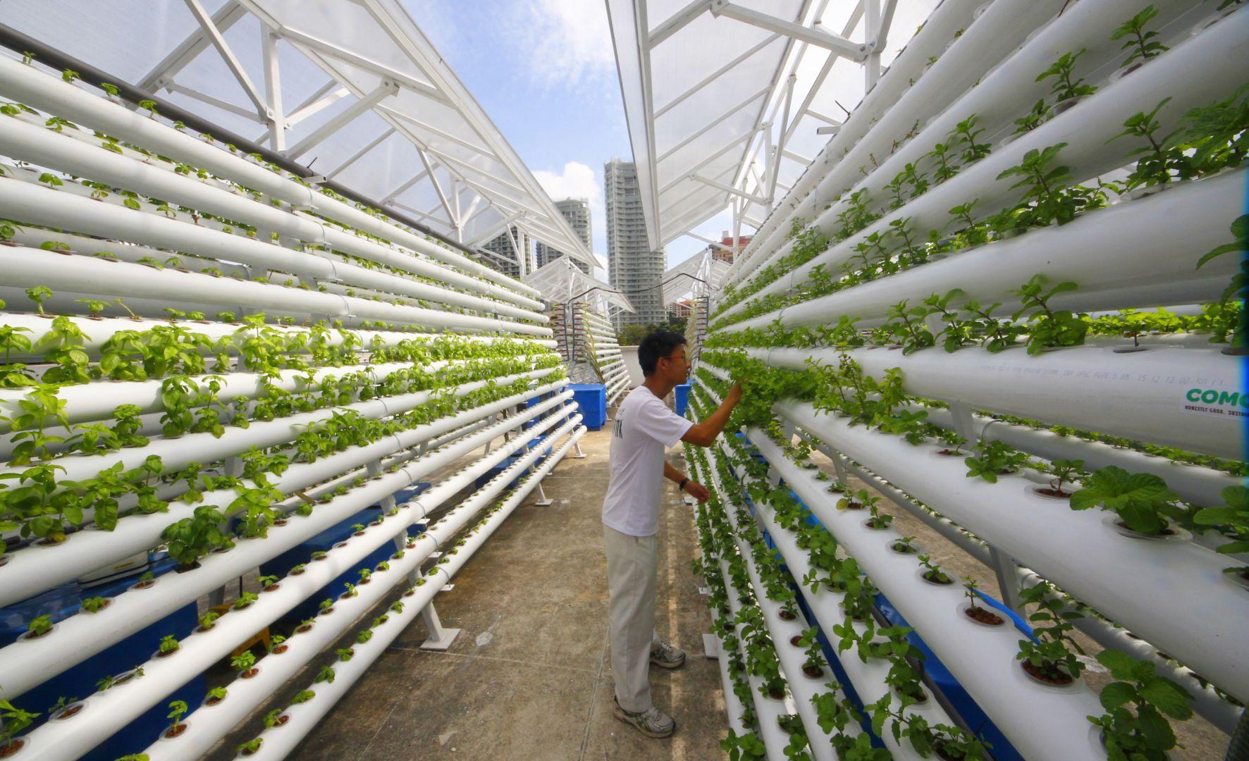 Manuale completo di tecniche per la coltivazione idroponica