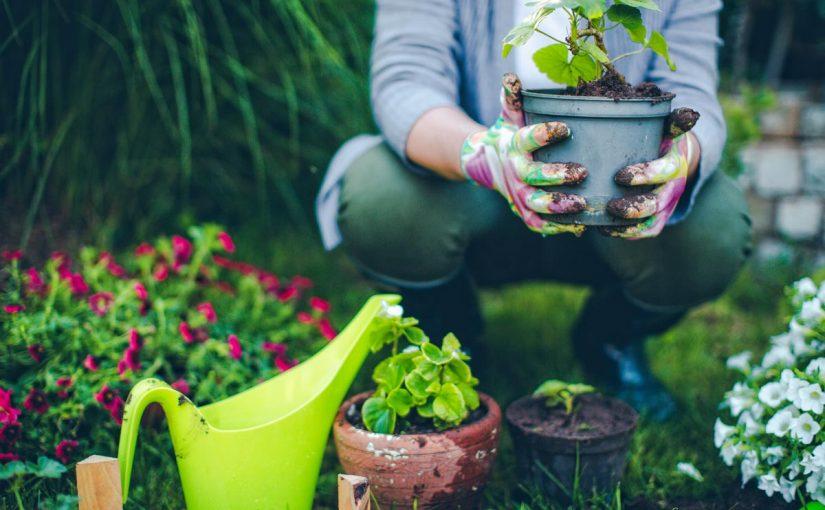 Manutenzione del prato e giardinaggio, rilassarsi all'aperto