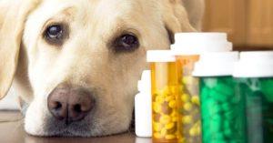 farmaci uso veterinario on line