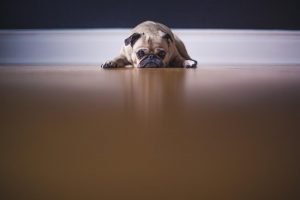 cane ed il caldo