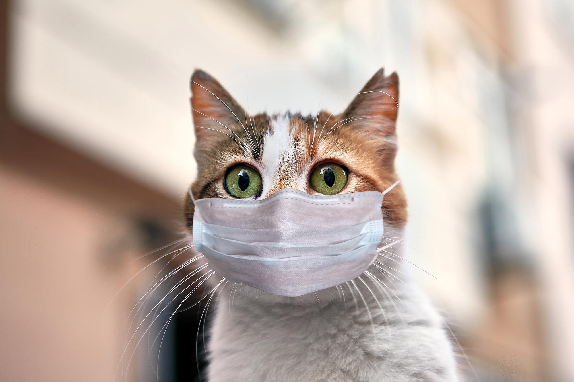 Animali e coronavirus: come regolarsi?
