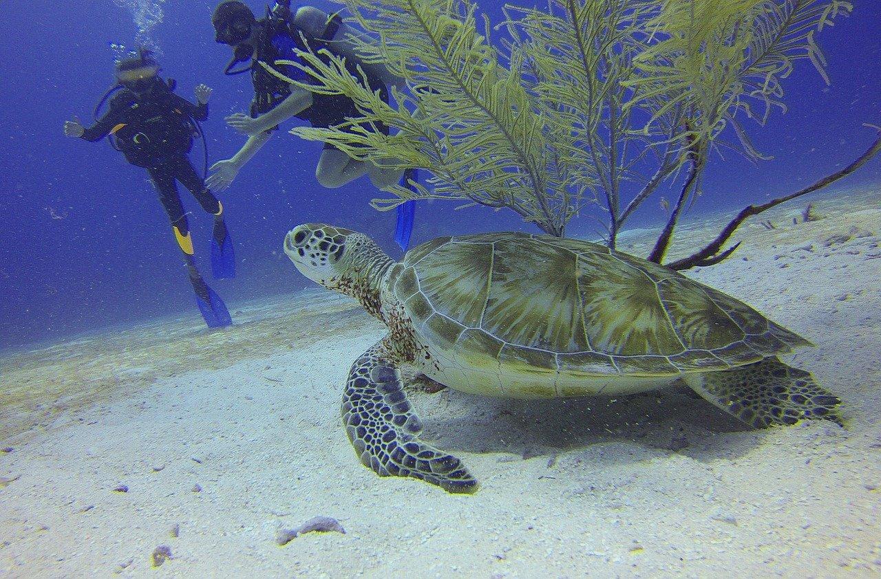 Viaggio in Baja California, cosa fare e cosa vedere