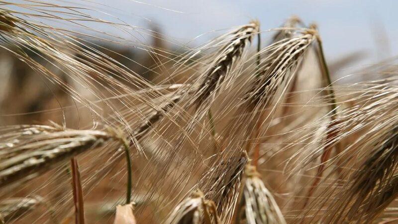 Sensibilità al glutine: che cos'è e differenze con la celiachia